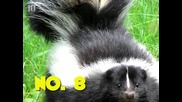 10 Животни, които не стават за домашни любимци