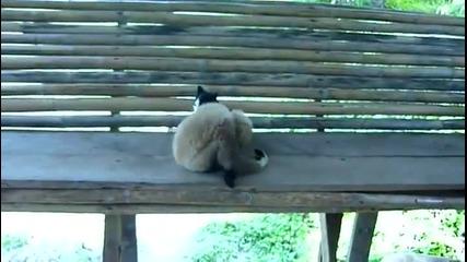 Закачлива маймуна си играе с коте !