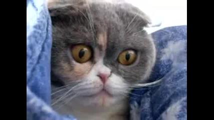 обърнете внимание на очите не котката