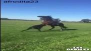 Жена получи ритник от коня си