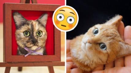 Японка прави ТВЪРДЕ реалистични 3D портрети на котки