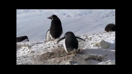 И Пингвините Крадат