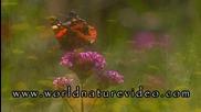 Релакс - Цветя и Пеперуди