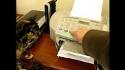 Котки се плашат от принтери