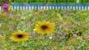 Моята цветна градина ... ( Richard Abel music) ...