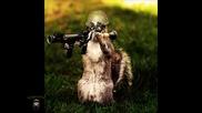 Point Blank - Squirrel War