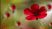 ✿ Аромат на пролет - планетата на цветята! ... ... ( Giovanni Marradi music) ... ...✿