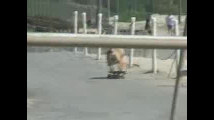 Куче На Скейт