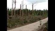 После Урагана,  Ярославская обл.