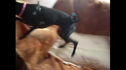 Стейси и Маца 2
