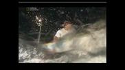 Най - Опасните Животни - Калмарът Хумболд-Коста Рика