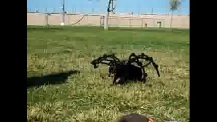 Най - големия паяк убиец в света!!!