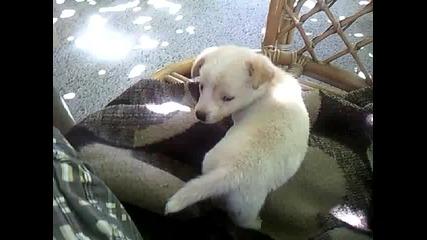 Кученце 2