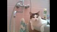 Много добре обучена котка пие от чешма!