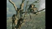 Horny Monkeys