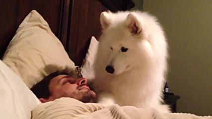 Това куче събужда стопанина си по възможно най-очарователния начин