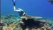 Diving in East Timor (timor Leste)