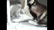 Котенце Vs Куче
