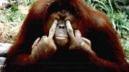 Средният пръст - история на жеста