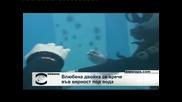 Влюбена двойка се врече във вярност под вода