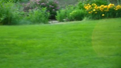 Две зайчета в двора
