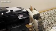 Котки срещу принтери - Забавна Компилация 2014