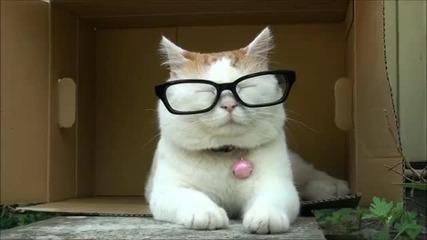 Котенце с очила!