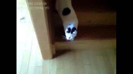 Мързеливо Коте Слиза По Стълбите