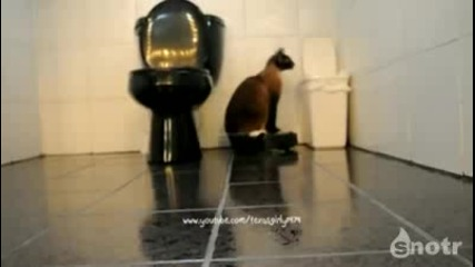 !!! Котка бие шамари на куче