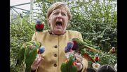 Germany: Merkel has her feathers ruffled by parrots amid election campaign *STILLS*