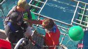 Инцидент с голяма бяла акула