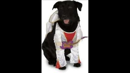 Кучета С Облекла