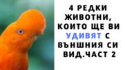 4 редки животни които ще ви удивят с външния си вид. Част 2