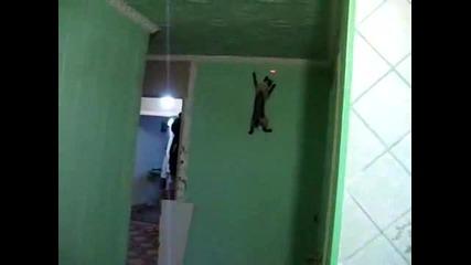Котето на спайдермен - O_o