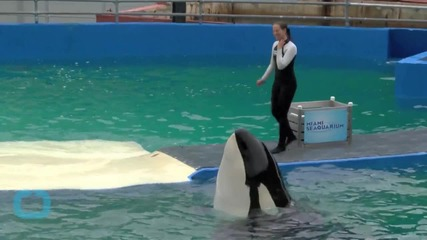 SeaWorld Tried to Answer Questions on Twitter, and it Did not Go Well