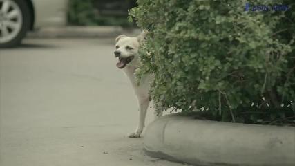 Ето какво може да направи едно куче за Вас:)