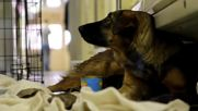 Russia: Far-fetched? Puppies up for adoption after dog gives birth on Moscow Metro
