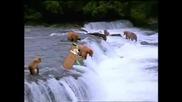 Йоги с други мечки