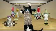 Котки Фитнесманияци - Реклама На Сок
