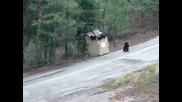Хора спасяват три малки мечета , попаднали в контейнер за боклук!