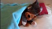 Сладко котенце си гушка меченцето!