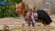 Кой ще спечели VIP Brother 2016 според кучето Рафаело