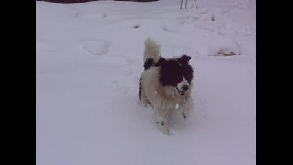 Рила в снега