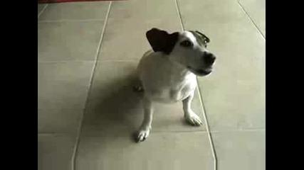 Талантливо куче