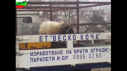 Only in Bulgaria Xi