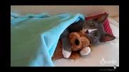 Котка спи с пухена играчка