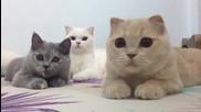 Тези котки ще ви разсмеят:)