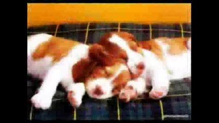 Животните И Хората , Спят
