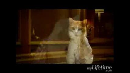 Catanic сладурска котешка пародия на сцена от Титаник