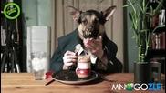 Куче човек закусва и пръска от смях